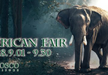 【 FAIR 】 9月フェア「SUMMER SALE  Vol.2 ~African  Fair~」